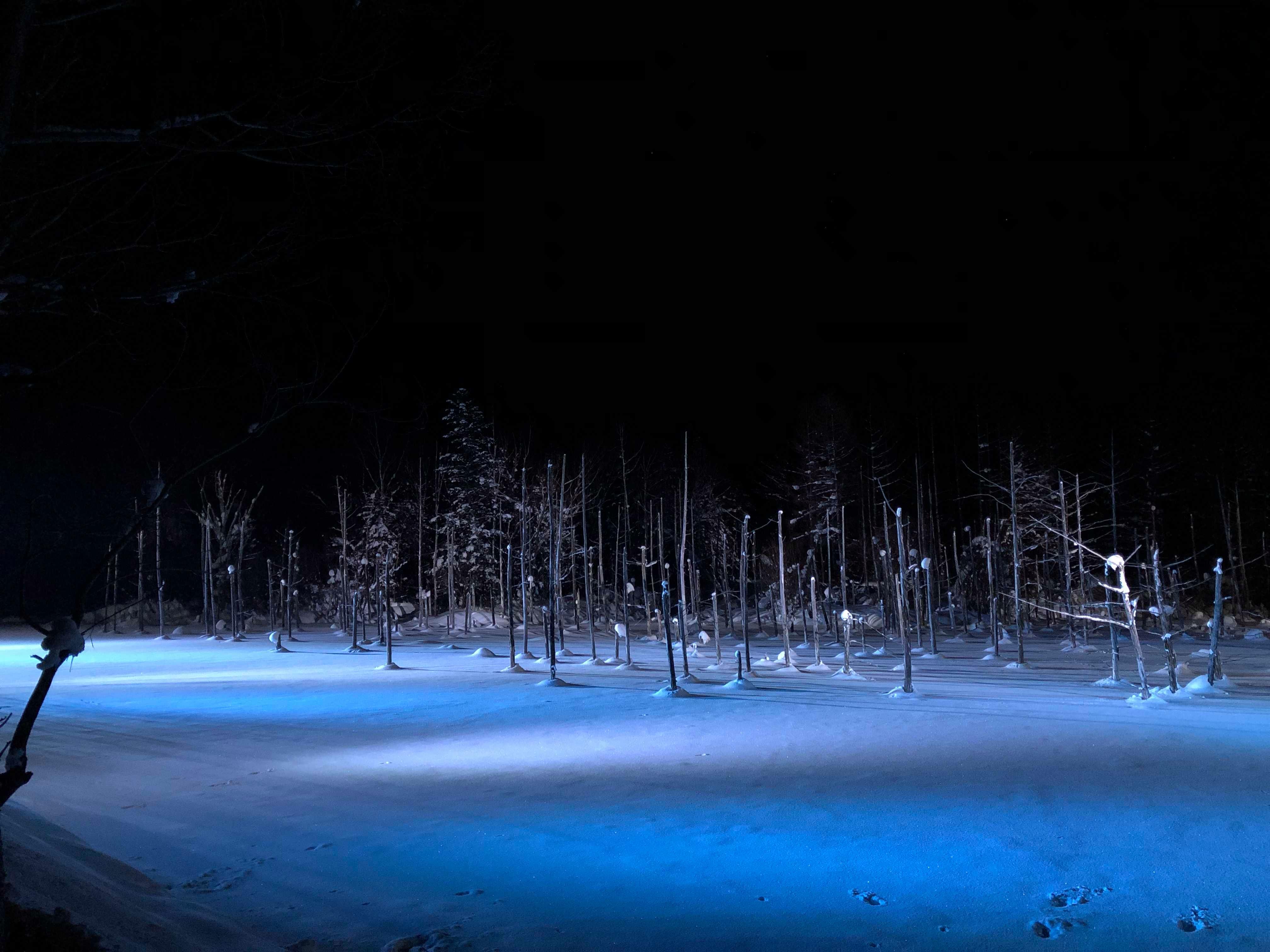 青池結凍了!冬季北海道美瑛青池夜間點燈