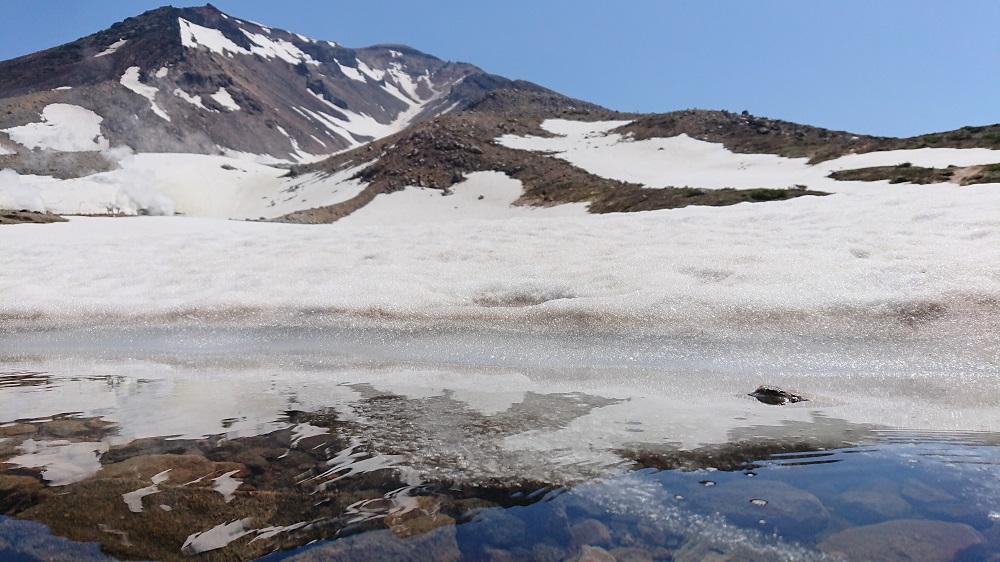 在東川町旭岳體驗殘雪與高山植物