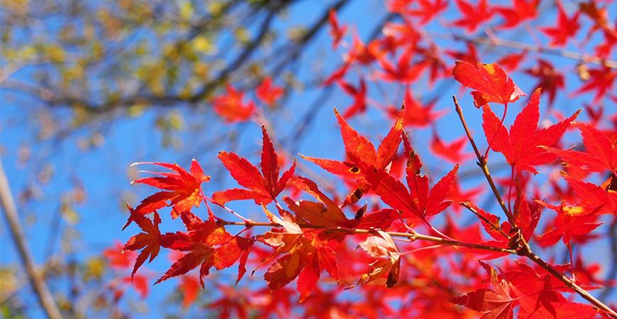 ★2019北海道東川日本語學校秋季班短期遊學招生簡章